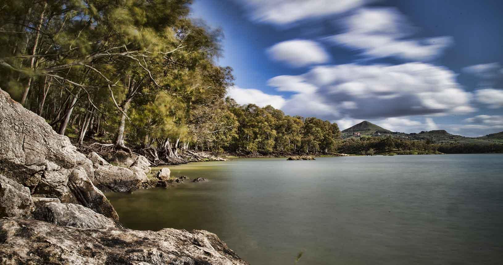 Particolare del bosco di eucalipto sulle rive del lago
